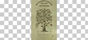 Genealogy Family Tree History Mexico Science PNG