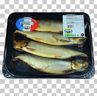Kipper Capelin Atlantic Herring Oily Fish Sardine PNG