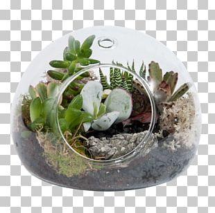 Cactus Garden Succulent Plant Flowerpot PNG