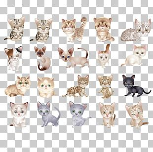 Cat Kitten Icon PNG