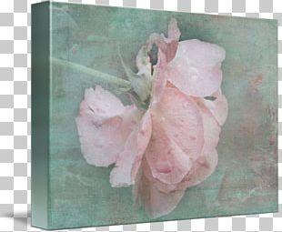 Pink M Petal PNG