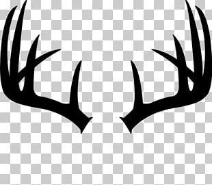 White-tailed Deer Antler Moose Elk PNG