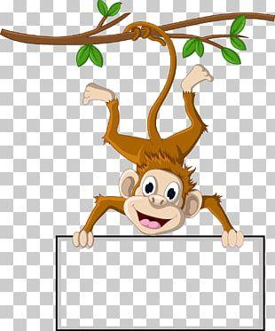 Monkey Cartoon PNG