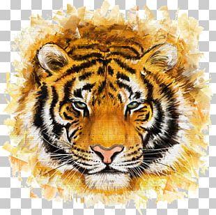 Bengal Tiger Felidae Painting Illustration PNG