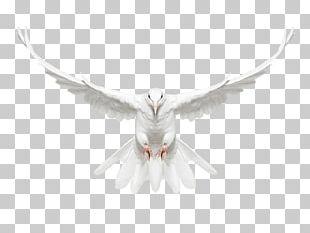 Bird Photography Photographer Art PNG