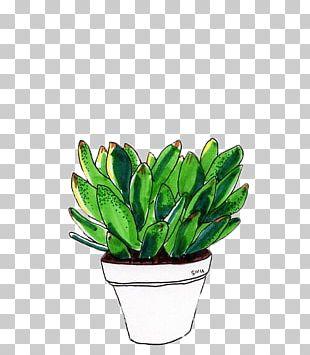 Drawing Cactaceae Succulent Plant PNG
