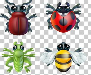 Insect Stock Photography PNG