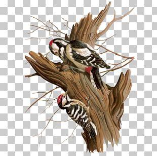 Bird Woodpecker PNG