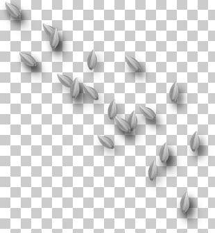 Petal Portable Network Graphics Flower Leaf Psd PNG