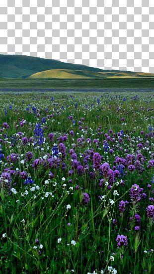 Lavender Violet Purple PNG