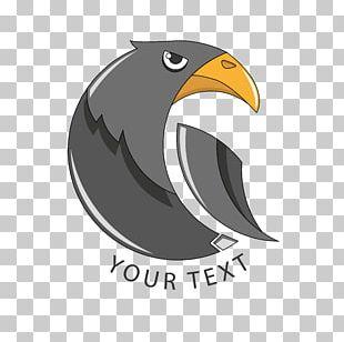 Bird Of Prey Beak Eagle PNG