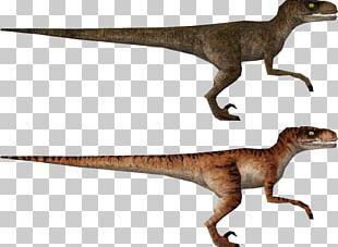 Velociraptor The Lost World Jurassic Park: Operation Genesis Tyrannosaurus Apatosaurus PNG