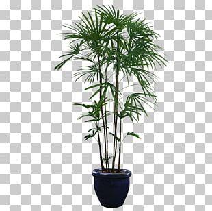 Houseplant Tree PNG