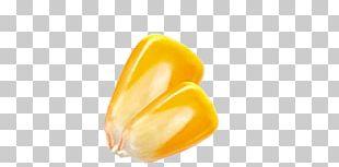 Yellow Orange PNG