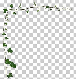 Common Ivy Vine Desktop Stock Photography PNG