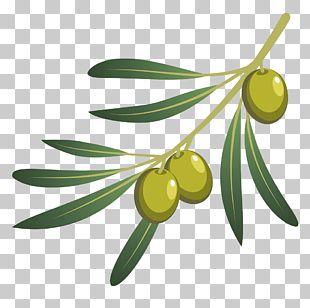 Olive Oil Olive Branch PNG
