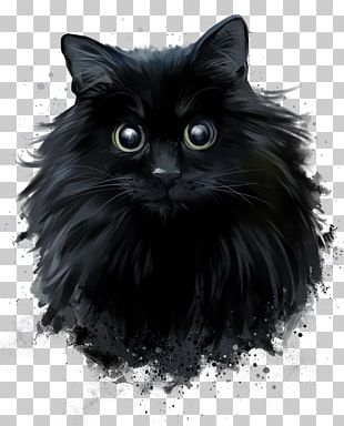 Persian Cat Black Cat Norwegian Forest Cat Drawing PNG