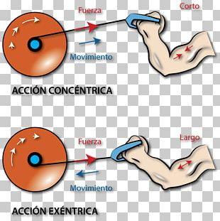 Force Strength Training Muscle Contraction Concentric Objects PNG