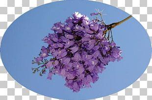 Cherry Blossom Lilac ST.AU.150 MIN.V.UNC.NR AD PNG