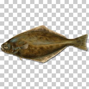 Flounder Fish Atlantic Halibut Pacific Halibut PNG