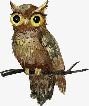 Hand-painted Watercolor Owl Standing Shu Chashang PNG