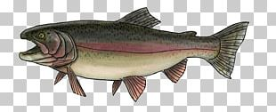 Salmon Rainbow Trout Sea Trout Oily Fish PNG