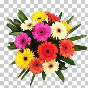Transvaal Daisy Floral Design Flower Bouquet Cut Flowers PNG