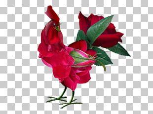 China Rose Rose Water Rose Hip Flower PNG