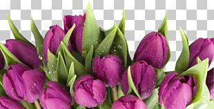 March 8 Flower Bouquet Holiday Tulip International Women's Day PNG