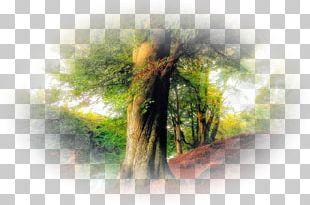 Ar-Rahman Tree Quran Allah PNG