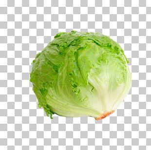 Iceberg Lettuce Organic Food Leaf Vegetable Salad PNG