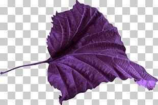 Leaf Petal Violet Color PNG