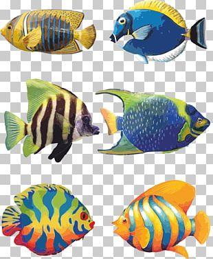 Koi Angelfish Tropical Fish Drawing PNG