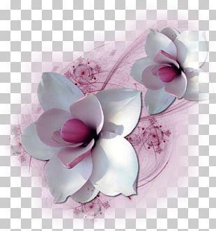 Cut Flowers Petal Floral Design Flower Bouquet PNG