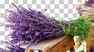 English Lavender Flower Bouquet Lavender Oil PNG