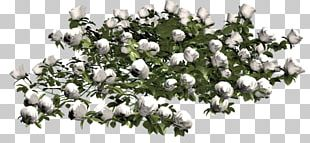 Cut Flowers Floral Design Garden Roses PNG