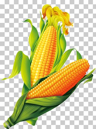 Corn On The Cob Maize Gold PNG