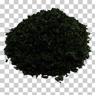 Gyokuro Tieguanyin Sencha Nilgiri Tea Assam Tea PNG