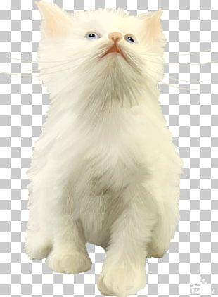 Persian Cat Whiskers British Semi-longhair Asian Semi-longhair Turkish Van PNG