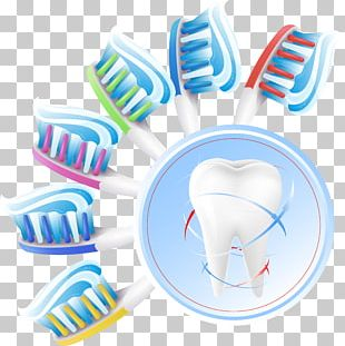 Human Tooth Oral Hygiene Teeth Cleaning PNG