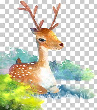 Reindeer Watercolor Painting Cartoon Illustration PNG
