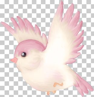 Bird Parrot Cartoon PNG