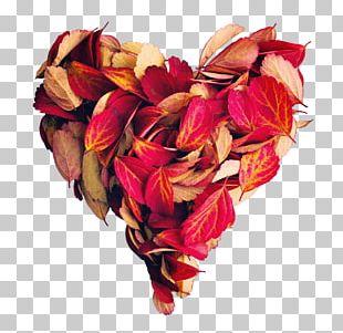 Le Cantine Di Corte Garden Roses Stock Photography Shutterstock Via Polignano PNG