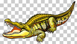 Nile Crocodile Alligator Saltwater Crocodile PNG