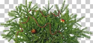 New Year Tree Christmas Ornament PNG