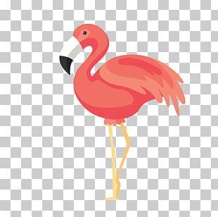 Bird Flamingos Euclidean PNG