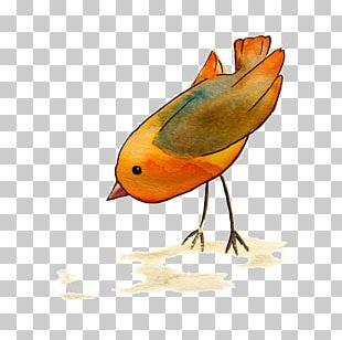 European Robin Bird Beak Wing Feather PNG