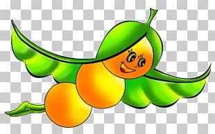 Soy Milk Soybean Pea PNG