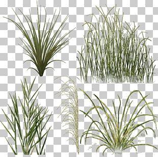 Aquatic Plants Rendering Tree PNG