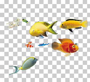Deep Sea Fish Marine Biology PNG